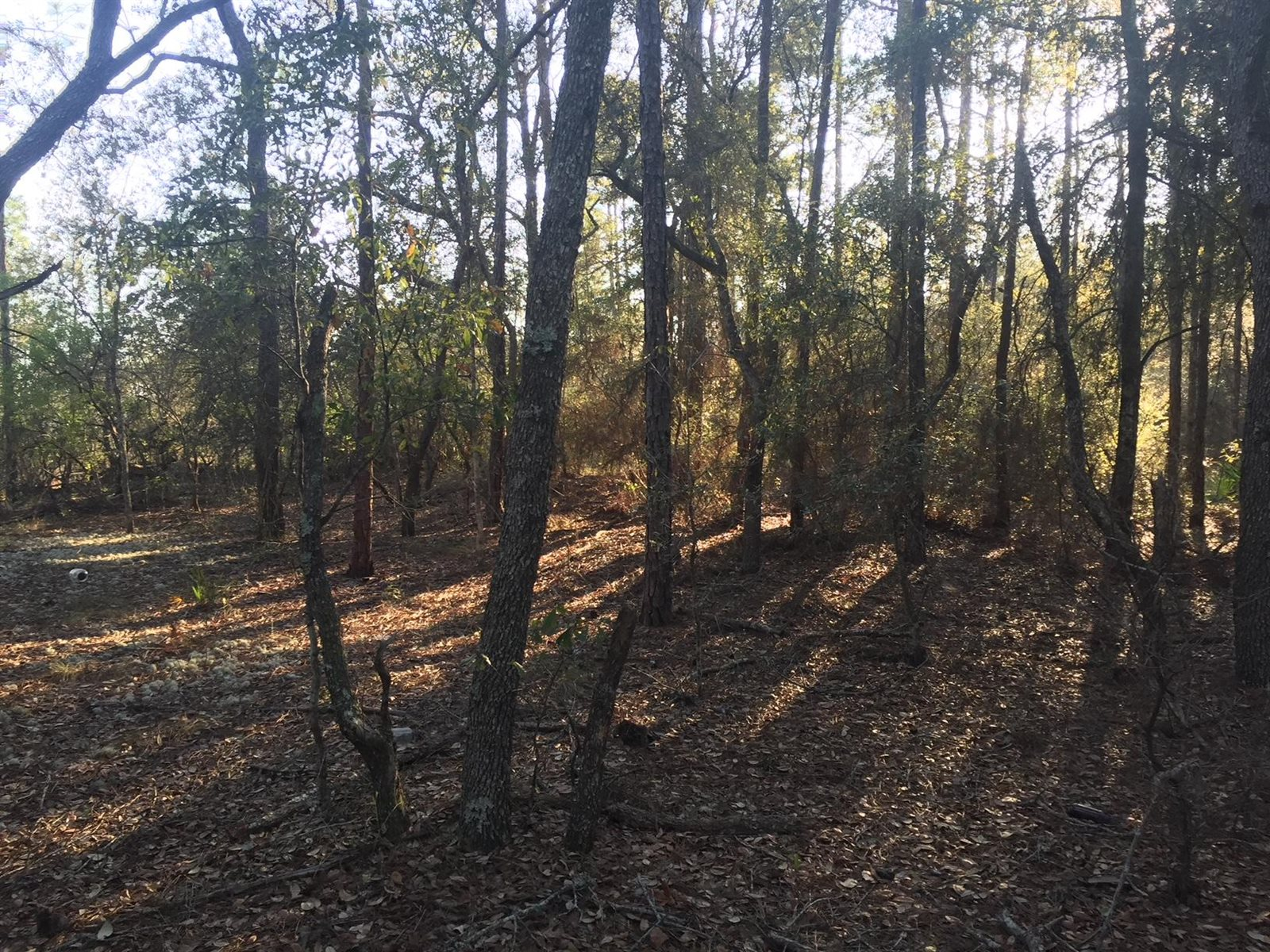 100 acres Black Creek Rd, Freeport, FL 32439