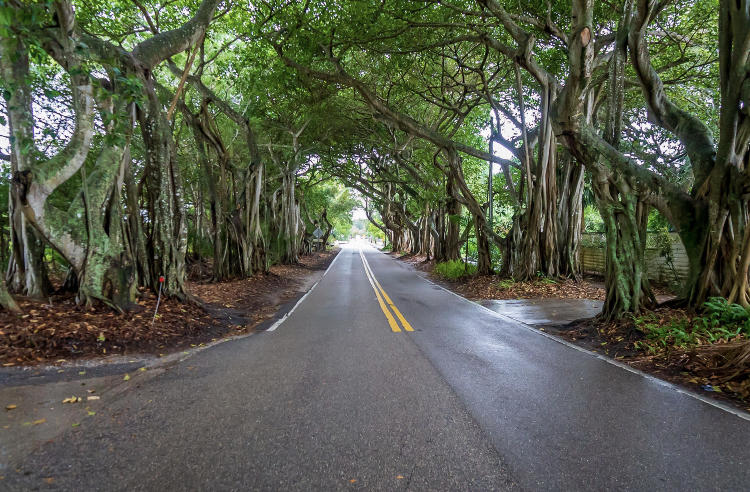 3734 SE Bent Banyan Way, Stuart, FL 34997