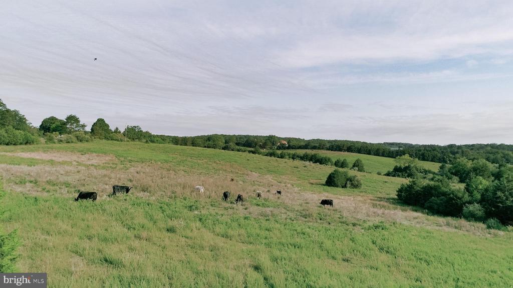Long Meadow, Front Royal, VA 22630