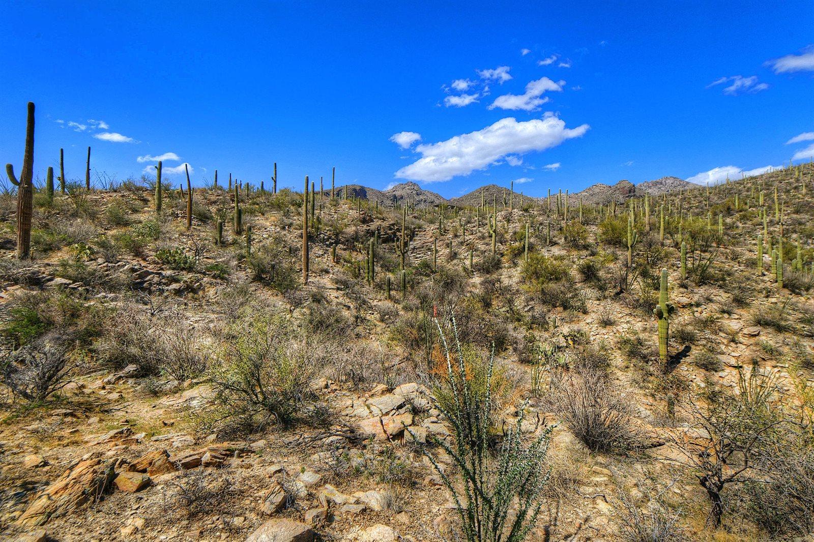 6255 North Via Tres Patos, #NA, Tucson, AZ 85750