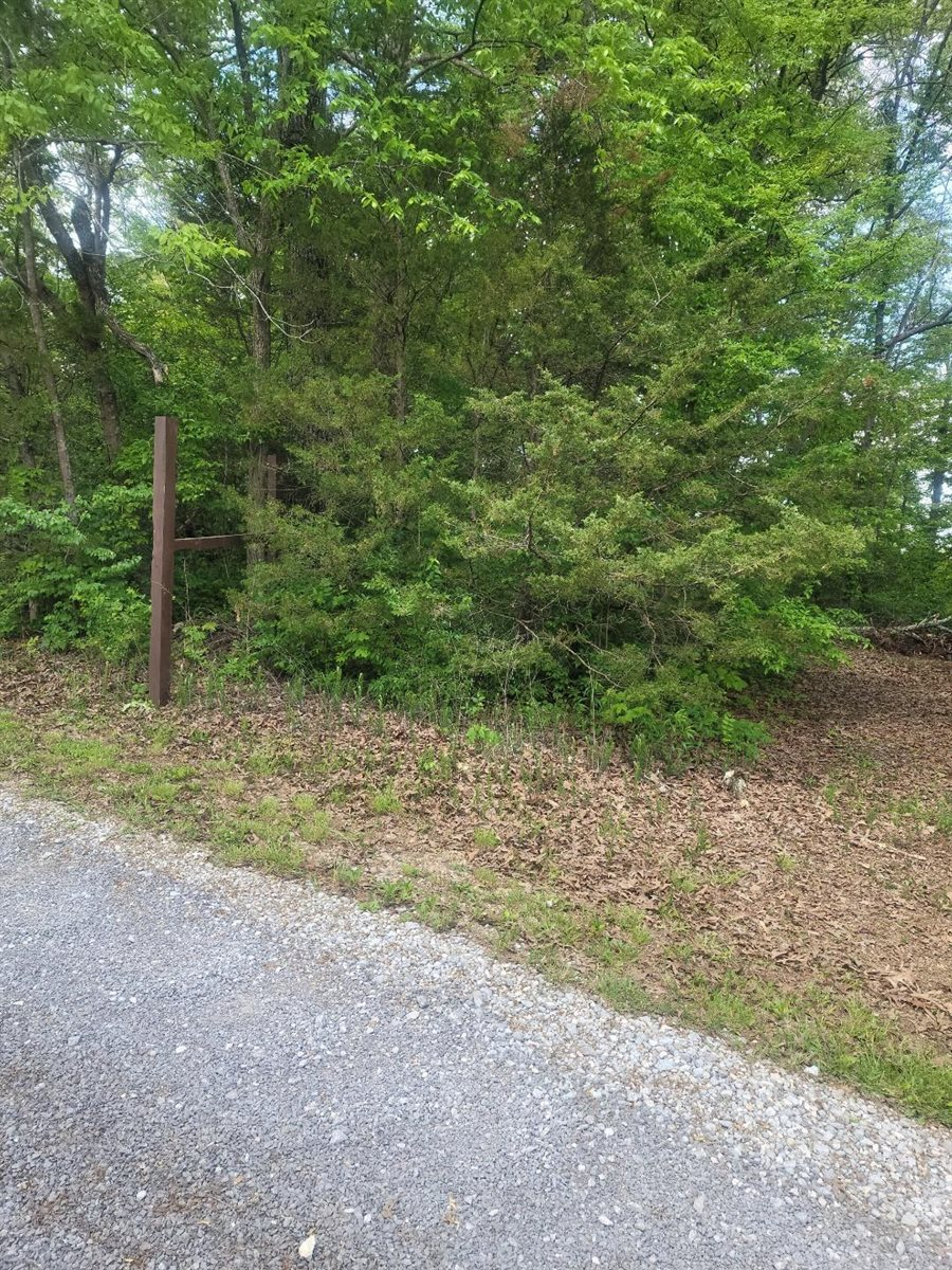 Selma Ave, Knoxville, TN 37914