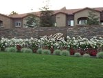 10001 Woodcreek Oaks Boulevard, #1323, Roseville, CA 95747