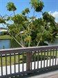492 Dempsey Drive, Cocoa Beach, FL 32931