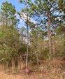 XXX Colt Drive, Crestview, FL 32539