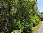 5. 6 acres Mallett Bayou Rd, Freeport, FL 32439