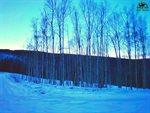 1529 Tall Birch Lane, Fairbanks, AK 99712