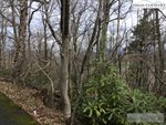 Lot 28 Milton Brown Heirs Road, Boone, NC 28607