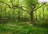 Lot 3 Woodland Springs Road, Boone, NC 28607