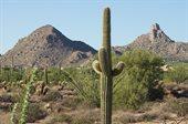 9736 East Vereda Solana Drive, Scottsdale, AZ 85255