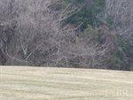 0 Lot 24 Berkley Page Court, Forest, VA 24551