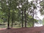 0 Lot 53 Lakepointe, #53, Forest, VA 24551