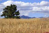 249 Prospect Boulevard, Pagosa Springs, CO 81147